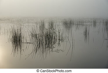 Morning light - Sunlight over a misty lake in the early ...