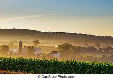Morning Mist Farm