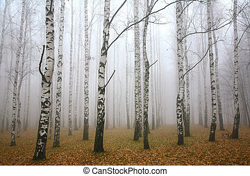Morning mist in autumn birch grove