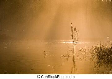 moring mist in warm orange glow on the river
