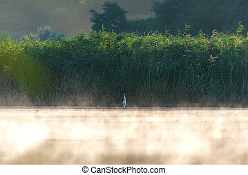 Morning mist on the river with reeds