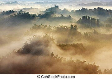 morning mist with bamboo and hill