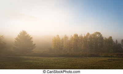 Morning mood - Meadow in morning fog penetrated by early ...