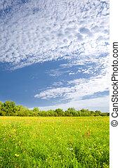 morning on flower meadow.