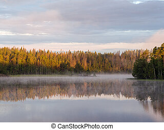morning on the forest lake