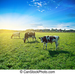 Morning pasture. Summer good weather shot