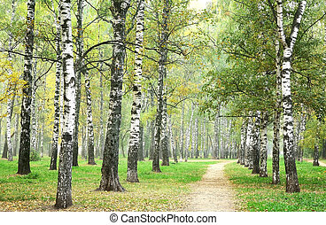 Morning pathway in mist autumn birch park