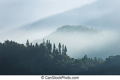 Morning scene of foggy forest and tree at Sun Moon Lake, Taiwan