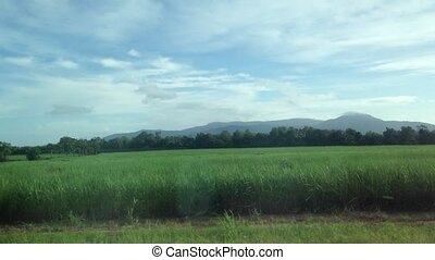 Morning scenery of Queensland Aus - Early morning scenery...