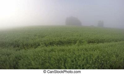 morning summer mist and sunrise