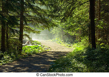 Morning sun beams in the forest