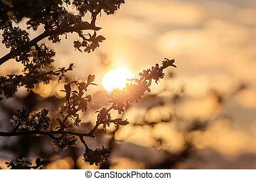 morning sun in garden