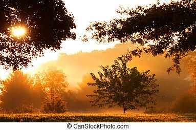 Morning sun light and misty morning