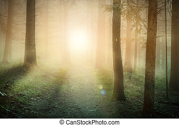 Morning sun on the foggy forest somewhere in europe