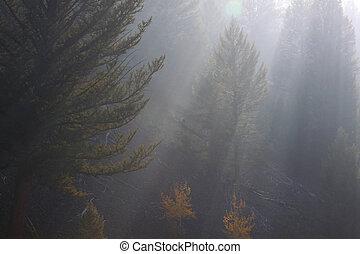 Morning sun rays in the fog
