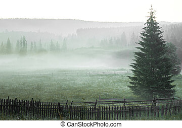Morning sun rays in the fog mountains tree