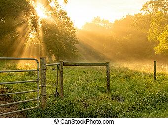 Morning Sun Rays Shining through the Trees