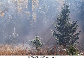 Morning sunbeams in autumn forest