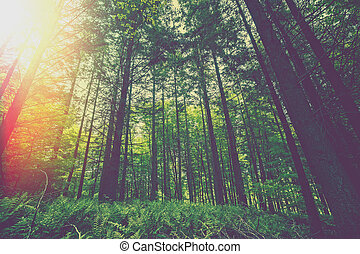 Morning sunlight in a green forest