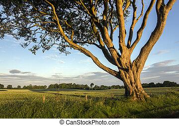 Morning sunlight in County Antrim - Northern Ireland
