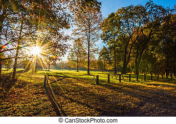 Morning Sunlight In Park - Bright sunshine and an early...