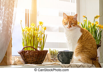 Cute funny red-white cat on the windowsill with blossom...