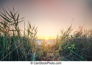 Morning sunrise by the sea with green grass