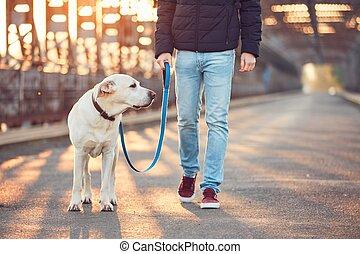 Morning walk with dog at the sunrise
