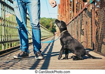 Morning walk with dog (black labrador retriever). Young man...