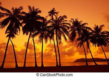morno, tropicais, pôr do sol