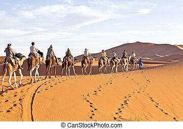 morocco., camello, dunas, caravana, arena, yendo, por, ...