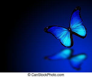 Morpho blue butterfly on dark blue background