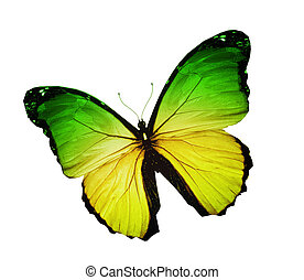 Morpho green yellow butterfly , isolated on white