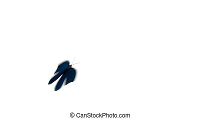 Morpho Menelaus Blue Butterfly Flying on a Green