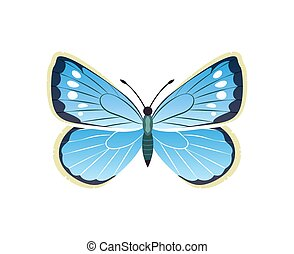 Morpho Peleides Blue Butterfly Vector Illustration