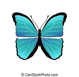 Morpho Peleides Butterfly Vector Illustration