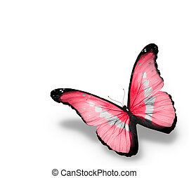 Morpho pink butterfly , isolated on white background