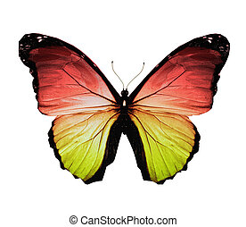 Morpho red yellow butterfly , isolated on white