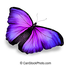 Morpho violet blue butterfly