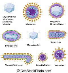 morphologie, von, gemeinsam, viren, eps8