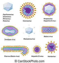 Morphology of common viruses that infect human