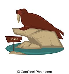 Morse animal and wooden signboard vector cartoon icon for ...