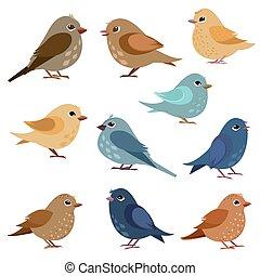 morsom, konstruktion, fugle, samling, din