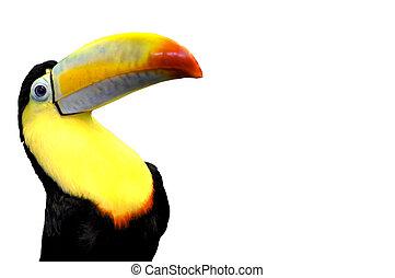 morsom, toucan