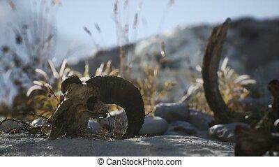 mort, crâne, marteau, désert