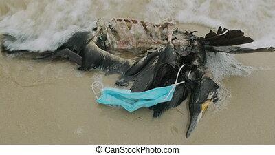 mort, impact, bird., disaster., environment., ambiant, ...