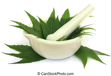 Mortar and pestle with medicinal neem leaves over white...