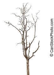 morto, e, secos, árvore, é, isolado, branco, fundo