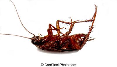 morto, scarafaggio