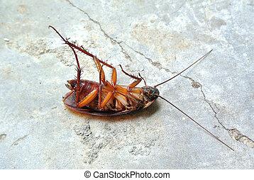 morto, scarafaggio, isolato, su, pavimento